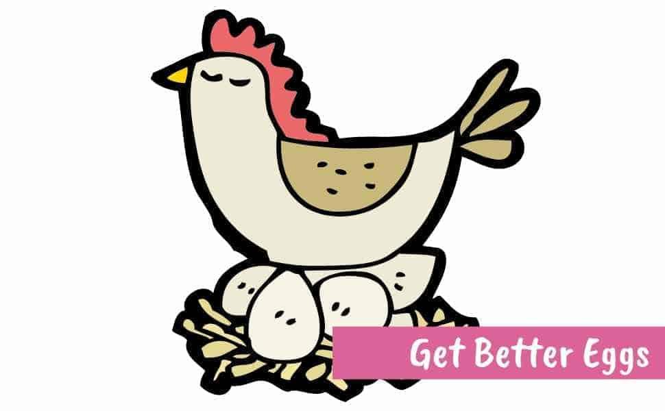 cartoon chicken sitting on eggs