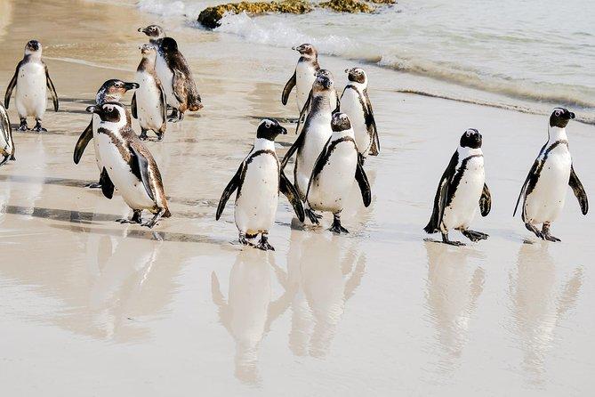 Cape Town Tour - Best of the Cape Peninsula!