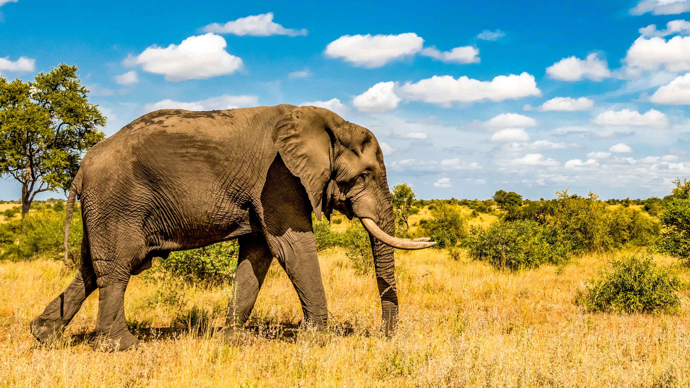 Kruger Park: 3-Day Tree House Safari