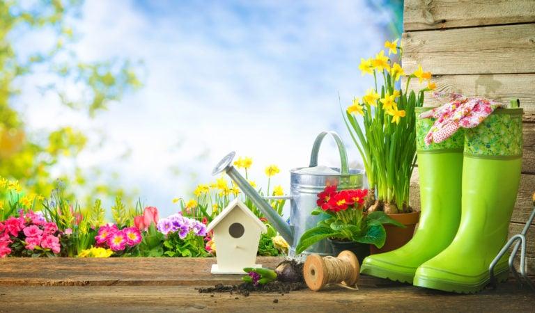 Тест: Как хорошо вы разбираетесь в растениях и цветах?