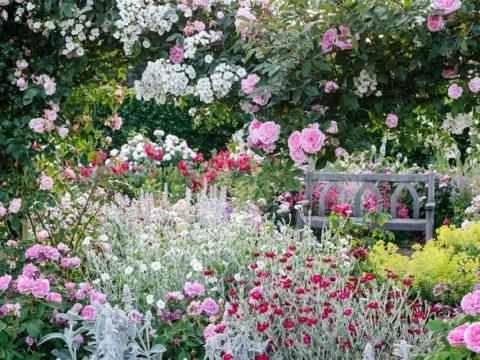 rosemoor rose garden 1