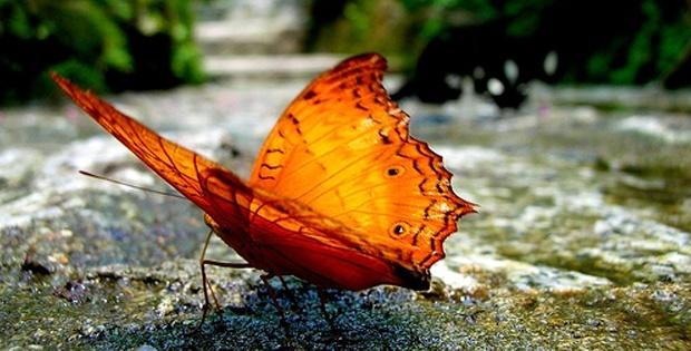 kuala-lumpur-butterfly-park_04
