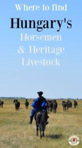 Hungary's Horsemen and Heritage Livestock
