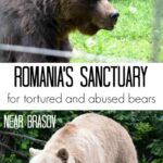 Romania Sanctuary for bears near brasov