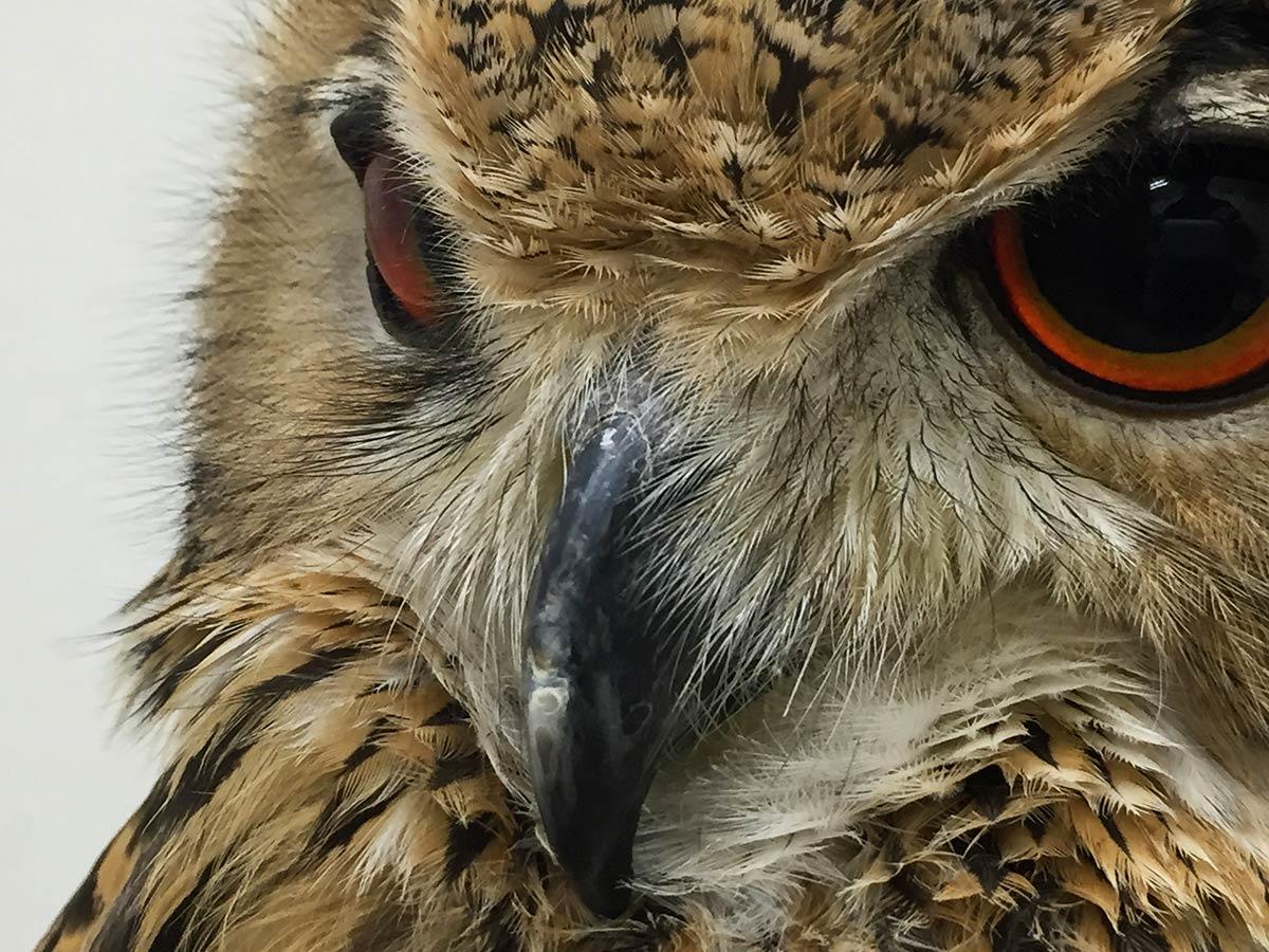owl face at Owl Cafe Tokyo