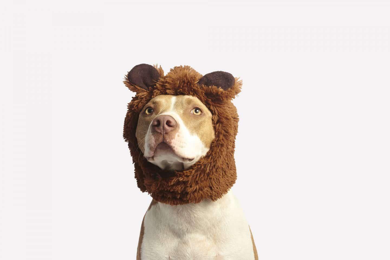 7x accessoires voor een oudere hond