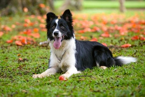 Vijf hondenrassen met veel energie