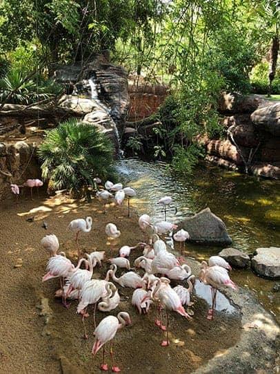 Biopark Fuengirola Flamingos