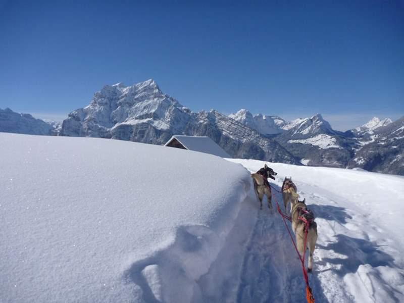 Schlittenhunde Tages-Abenteuer