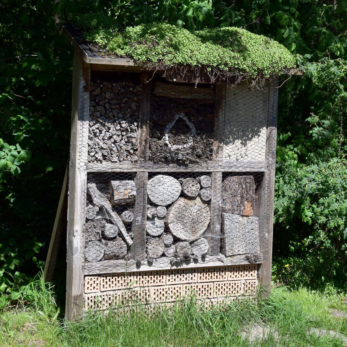Insektenhotel: Unterschlupf für Nützlinge