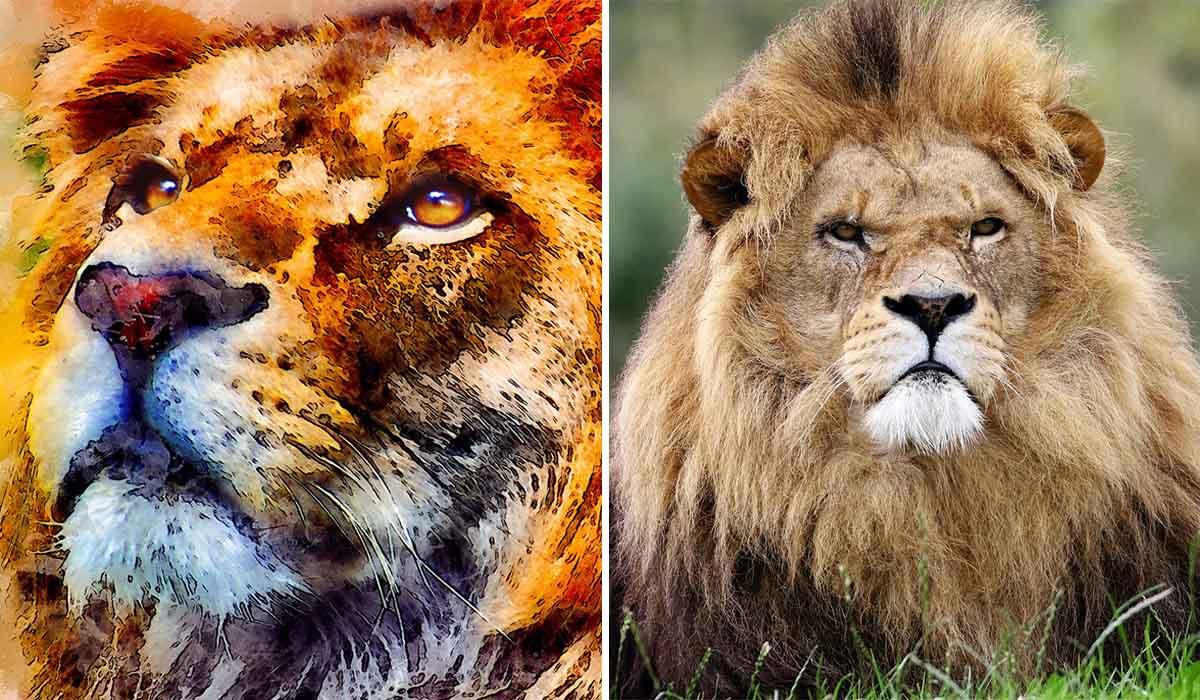 taniere du lion