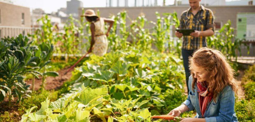 Drei Personen betreiben Urban Gardening, gärtnern also mitten in der Stadt