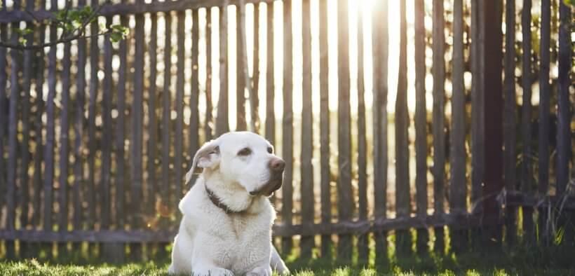 Der Familienhund vor einer der vielen Zaunarten.