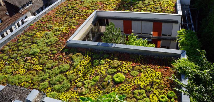 Extensive Dachbegrünung auf einem Flachdach