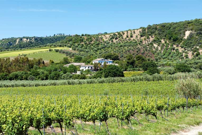 In der lockeren und Nährstoffreichen Erde gedeihen auch Weinreben hervorragend.