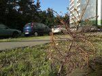 Новогодние елки перерабатывают в удобрение
