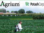 Слияние PotashCorp и Agrium будет завершено позднее, чем ожидалось ранее