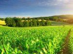 Китай берет курс на органическое сельское хозяйство