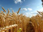 Рискованное земледелие – проектам не помеха