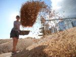 ОЗК будет сотрудничать с фермерами Красноярского края