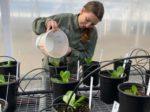Пробиотики удалят углекислый газ из атмосферы