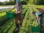 Органическое земледелие снижает риск болезней