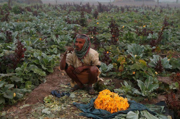 Walmart поможет индийским аграриям