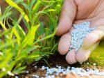 Какие удобрения и как необходимо вносить весной?