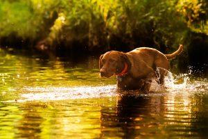 Hundeseminare München Anti-Jagd-Training
