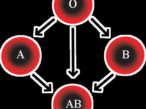 Hoe ontdek ik mijn bloedtype?