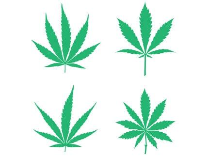Sativa, Indica und Hybrid: Worin unterscheiden sich die Cannabisarten?