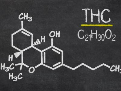 THC: Wie sieht die aktuelle Studienlage aus?
