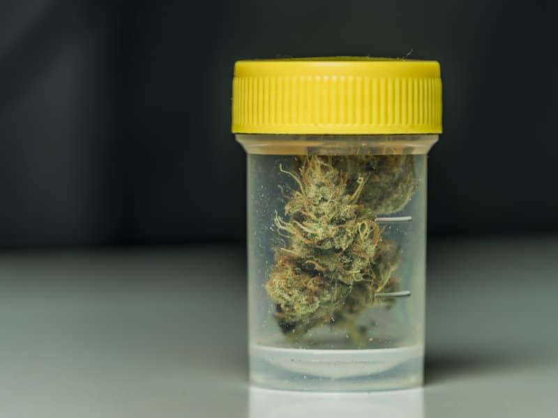 Bisher rund 149 Kilo Cannabisblüten in Apotheken ausgegeben