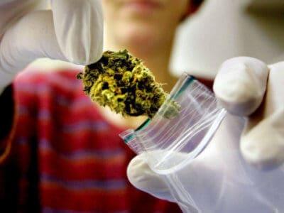 Cannabisblüten – Erfahrungen aus der Apotheke