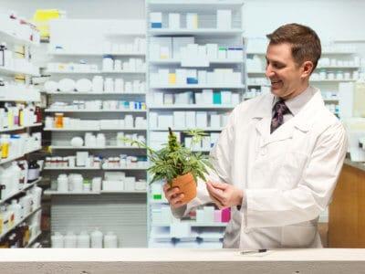 Cannabis-Legalisierung: Apotheker sind dagegen