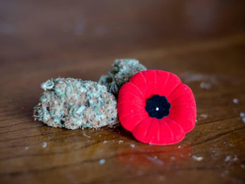 Oberste Drogenbehörde der USA genehmigt Cannabisstudie mit Veteranen