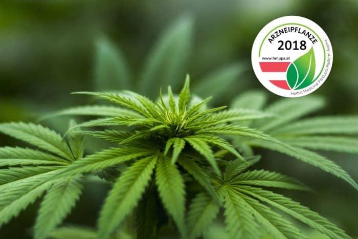 Cannabis sativa ist Arzneipflanze 2018 in Österreich
