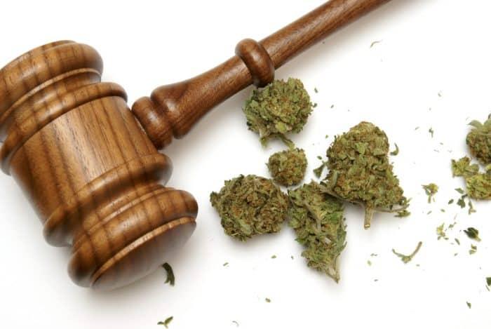 Cannabis-Anbau: Geplante Mengen nicht ausreichend