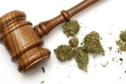 Cannabis-Anhörung: Termin für Vergabenachprüfungsverfahren steht fest