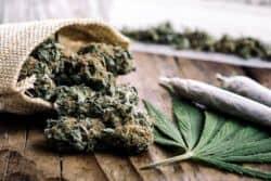 Einheitliche Regelung für Cannabis-Konsum gefordert