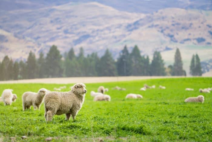 Neuseeland: Cannabis als Medizin kommt bis 2020