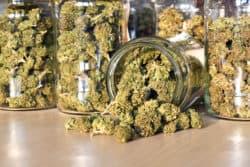Cannabis-Ausschreibung: Neues Verfahren