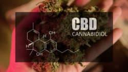 CBD-Produkte: Aktuelle Rechtslage