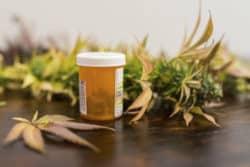 Nachfrage nach Cannabis als Medizin steigt