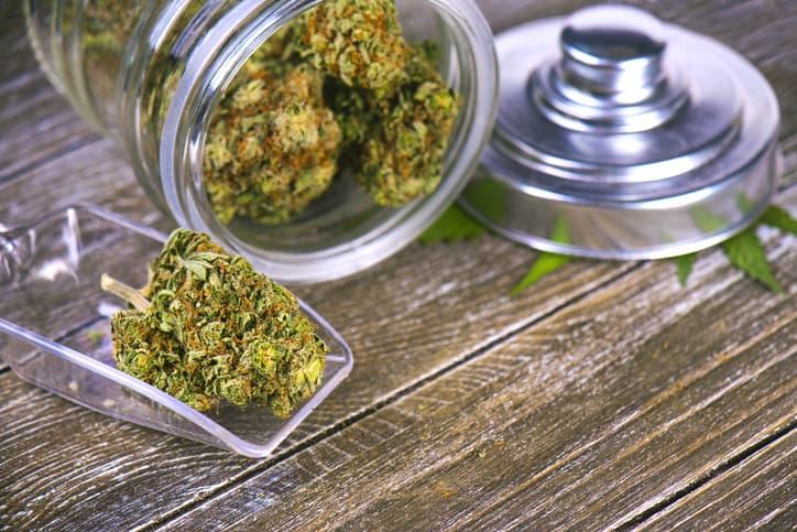 Blüten: Sterben sie in der Cannabistherapie aus?