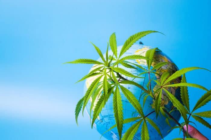 Legalisierung von Cannabis: Jahresrückblick 2018