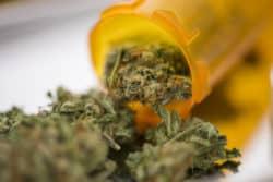 Cannabisprüfung in Apotheken fällt nicht weg