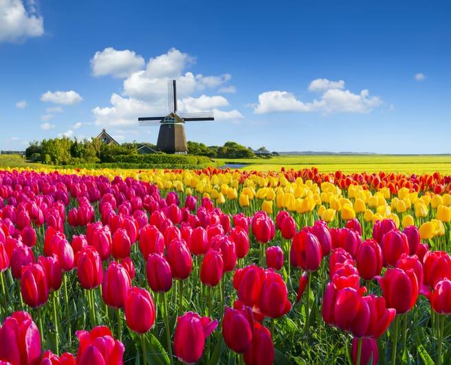 Niederländische Ärzte verordnen weniger Cannabis