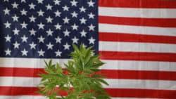 Cannabis-Lebensmittelmarkt in den USA boomt