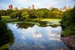 New York: CBD Lebensmittel verschwinden